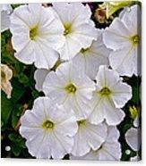 White Flowers Acrylic Print