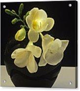 White Freesias In Black Vase Acrylic Print