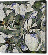 White Geraniums   -- Vangogh Acrylic Print