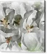 White Geraniums - Watercolor Acrylic Print