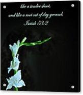 White Gladiola Isaiah 58 2 Acrylic Print