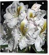 White Gold Acrylic Print