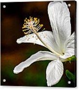 White Hibiscus II Acrylic Print