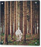 White Horse In The Wood Acrylic Print by Julia Davila-Lampe