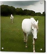 White Horses Acrylic Print