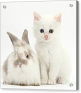 White Kitten And Baby Rabbit Acrylic Print
