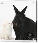 White Kitten And Black Rabbit Acrylic Print