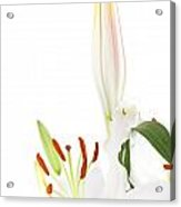 White Lillys And Background Acrylic Print