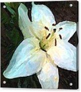 White Lily Listening Acrylic Print
