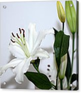 White Lily With Buds Acrylic Print