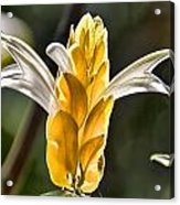 White Mixed With Yellow Acrylic Print