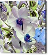 White Orchids And A Touch Of Blue Acrylic Print by Doris Wood