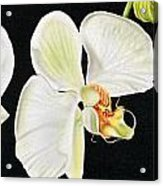 White Orchids Acrylic Print