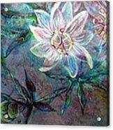 White Passion Acrylic Print
