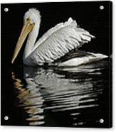White Pelican De Acrylic Print