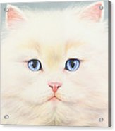 White Persian Acrylic Print by Andrew Farley