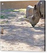 White Rhino And Ibex Acrylic Print