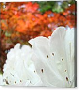 White Rhododendron Flowers Autumn Floral Prints Acrylic Print by Baslee Troutman