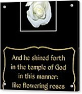 White Rose With Bible Verse From Sirach Acrylic Print