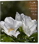 White Roses - Purge Me With Hyssop Acrylic Print