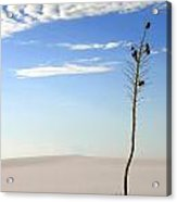 White Sands National Monument 1 Acrylic Print