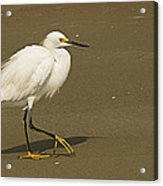 White Seabird Walking Acrylic Print