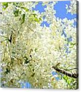 White Shower Tree Acrylic Print