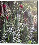 White Spike Orchids Acrylic Print by Denice Breaux
