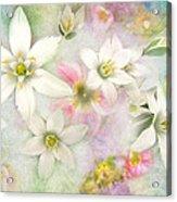White Stars IIi Acrylic Print