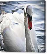 White Swan Acrylic Print by Elena Elisseeva