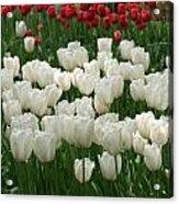 White Tulips 2 Acrylic Print