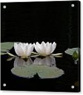 White Water-lily 6 Acrylic Print