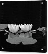 White Water-lily 7 Acrylic Print