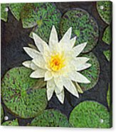 White Water Lily Acrylic Print by Andee Design