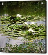 White Water Lily Pond Acrylic Print