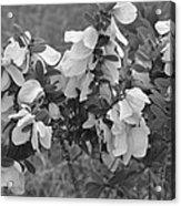 White Wild Flowers B W Acrylic Print