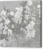 White Wild Flowers Acrylic Print