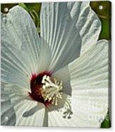 White Wildflower I Acrylic Print