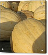 White Yellow Pumpkins Acrylic Print
