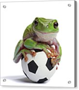 Whites Tree Frog On Small Football Acrylic Print