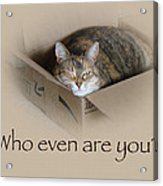 Who Even Are You - Lily The Cat Acrylic Print