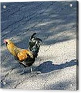 Why Did He Cross The Road Acrylic Print