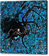 Wicked Widow - Blue Acrylic Print
