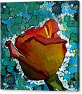 Wild And Crazy Rose Bud Acrylic Print