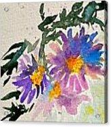 Wild Asters Acrylic Print