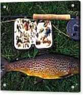 Wild Brown Trout And Fishing Rod Acrylic Print