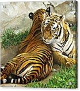 Wild Content Acrylic Print