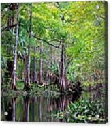 Wild Florida - Hillsborough River Acrylic Print