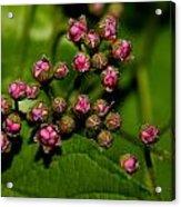 Wild Flower Blossoms 2 Acrylic Print