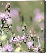 Wild Flowers - Just Wild Acrylic Print